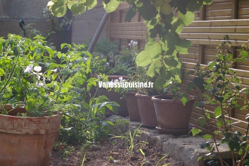 jardin, merveilles et kikuyu