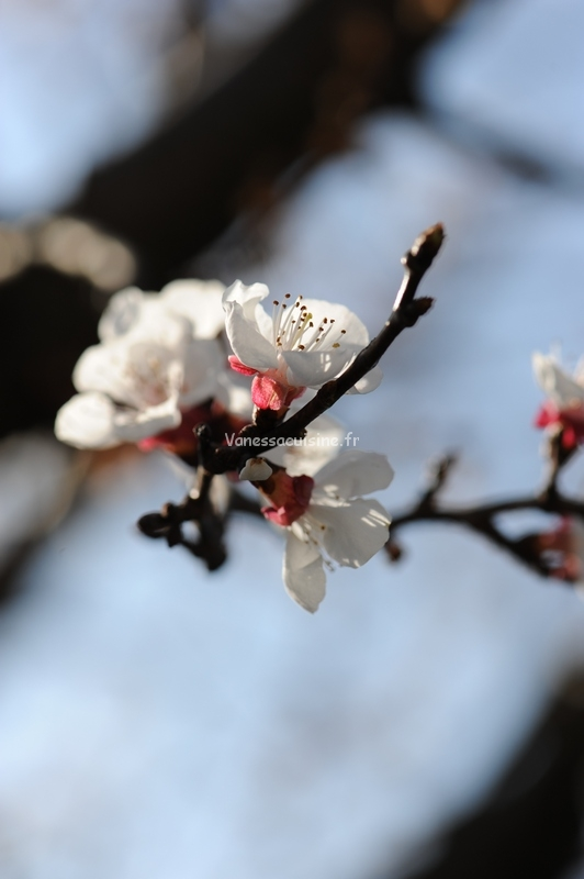 Ouf que le printemps est là !