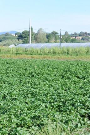 champs agriculture raisonnee frejus