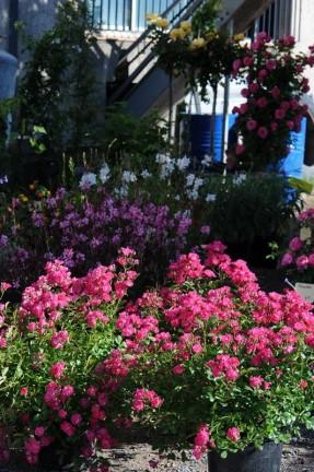 Etal de fleurs au marché de la vallée rose