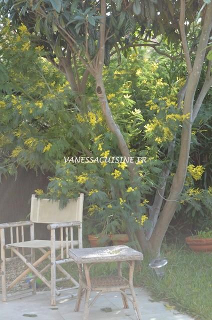 C'est la saison des oursins, du mimosa et des déjeuners en terrasse !
