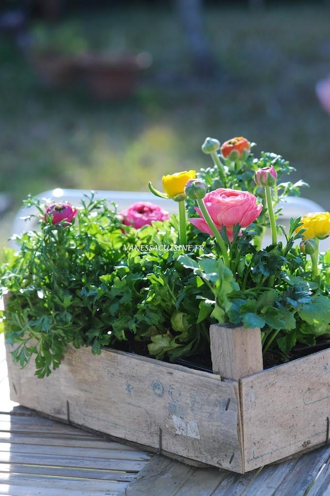 Renoncules multicolores, printemps - Multicoloured buttercups, spring time - Vanessa Romano - photographe et styliste culinaire (3)