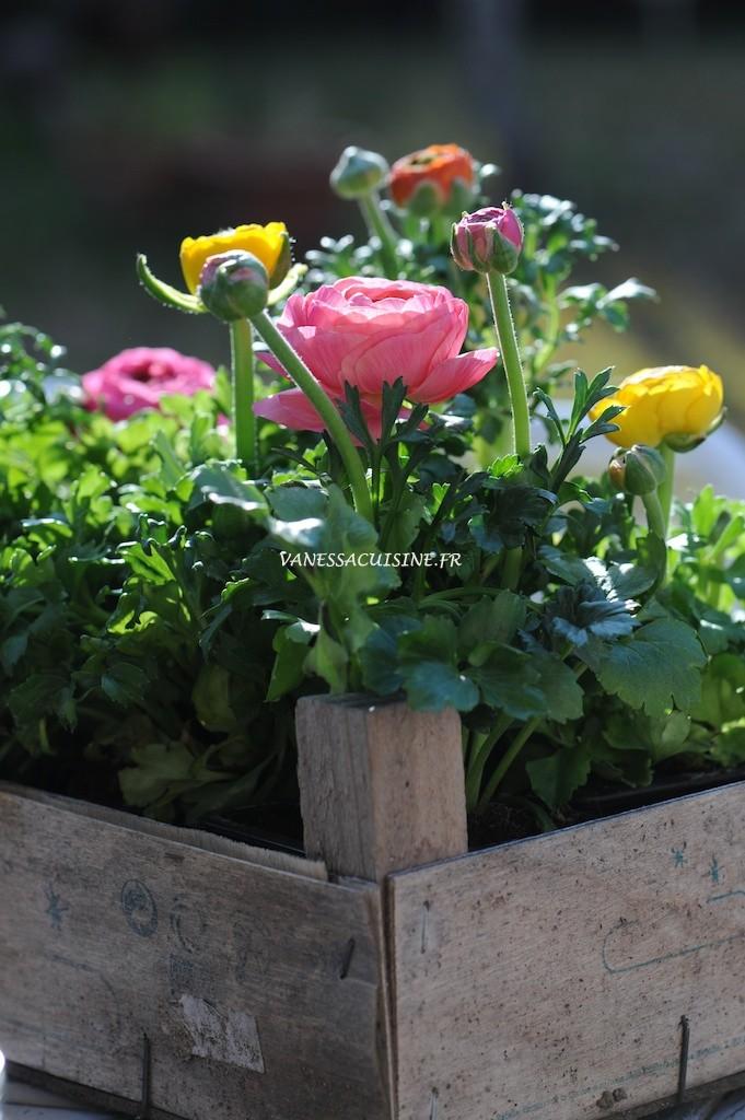 Renoncules multicolores, printemps - Multicoloured buttercups, spring time - Vanessa Romano - photographe et styliste culinaire