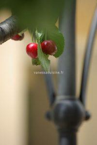Le-temps-des-cerises-Vanessa-Romano-photographe-culinaire-500x746-custom.jpg