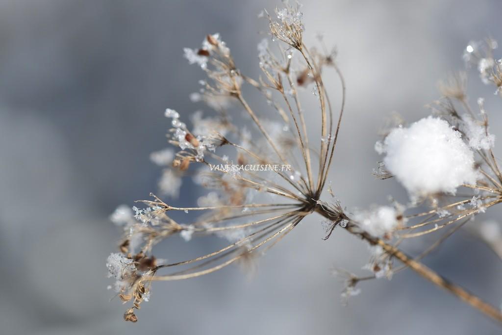 Fleur enneigée à Seyne les Alpes