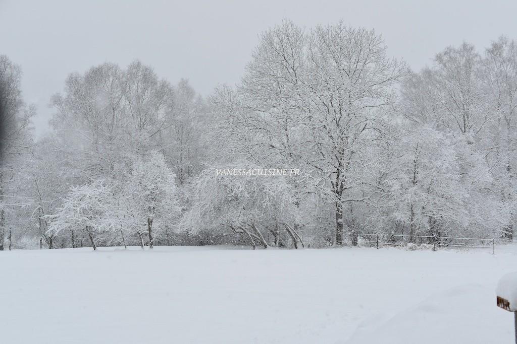Champs sous la neige