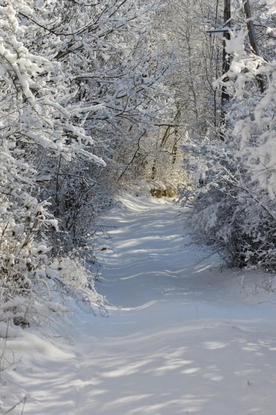 Chemin enneigé à Seyne les Alpes