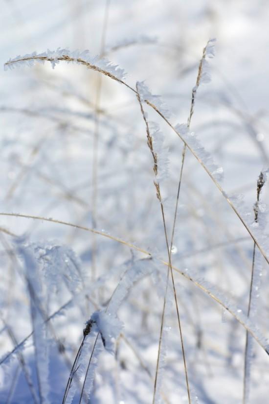 herbes glacées Seyne les Alpes