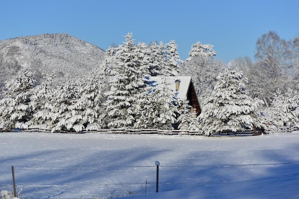 chalet et sapins sous la neige à Seyne les Alpes
