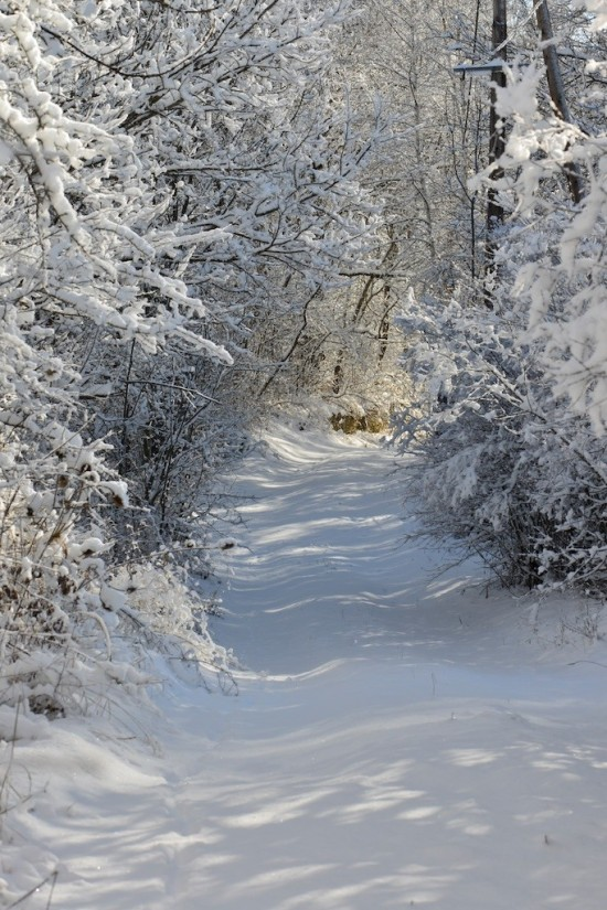 photo de chemin enneigé à Seyne les Alpes