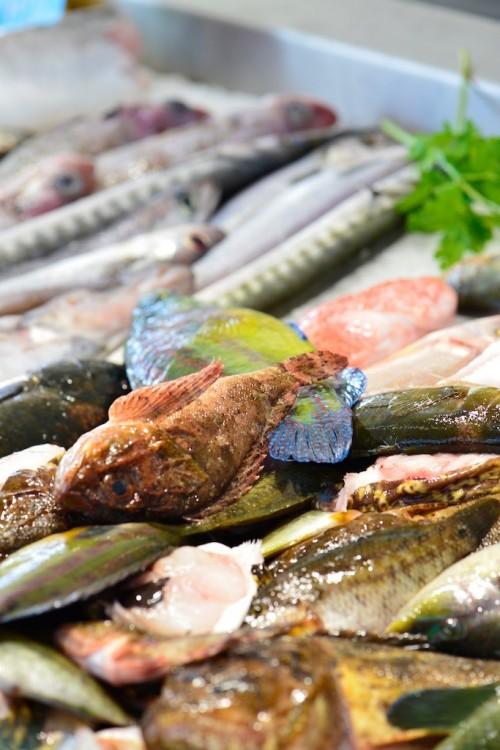 Les poissons de la soupe de roche