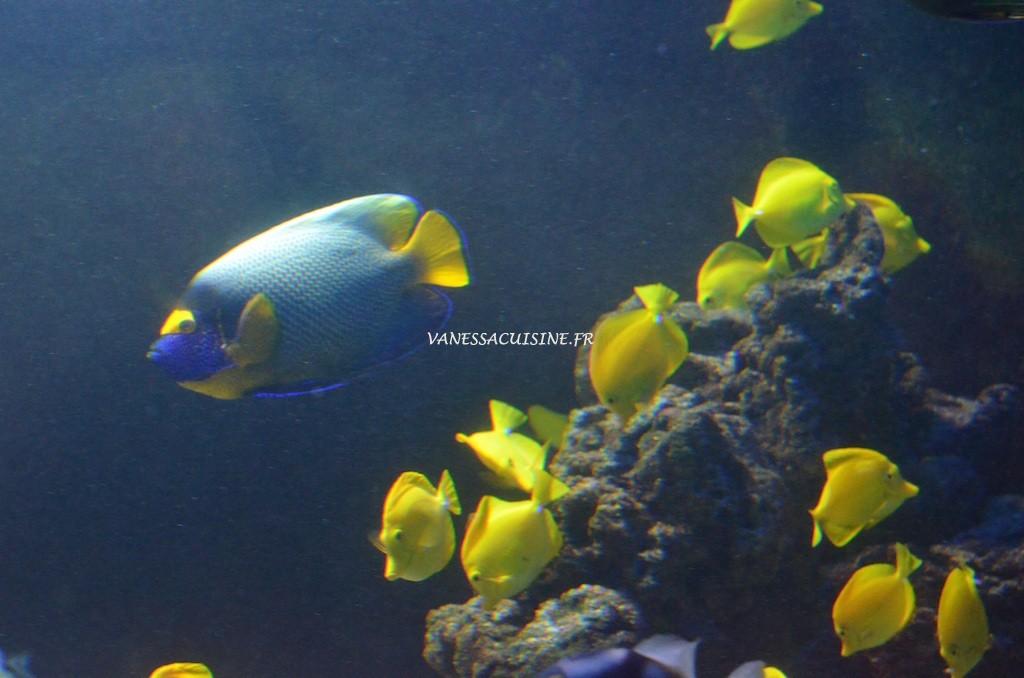 Aquarium à Monaco