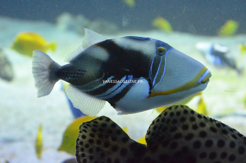 Poisson dans un aquarium au musée océanographique de Monaco