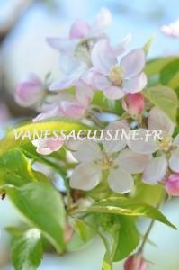 fleur-de-pommier-apple-tree-flowers-vanessa-romano-photographe-et-styliste-culinaire-1-199x300