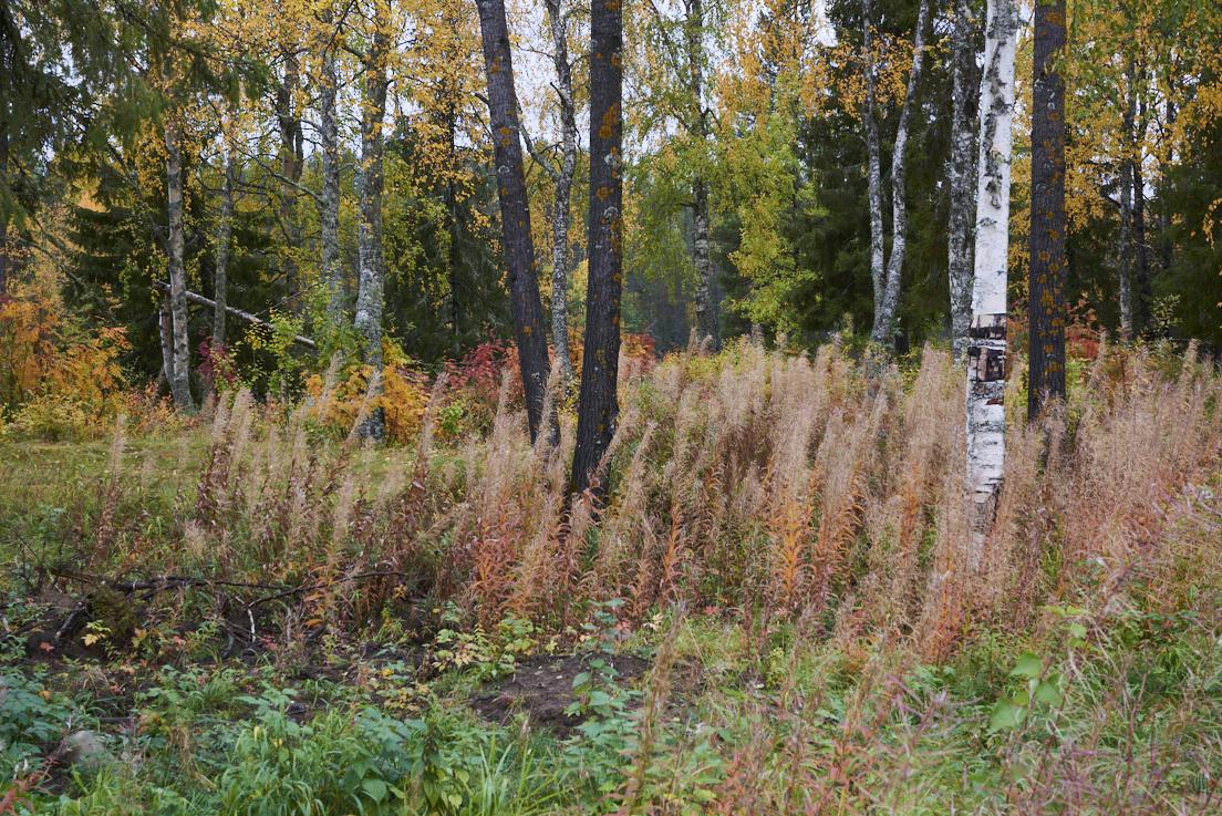 Les bois en Laponie suédoise