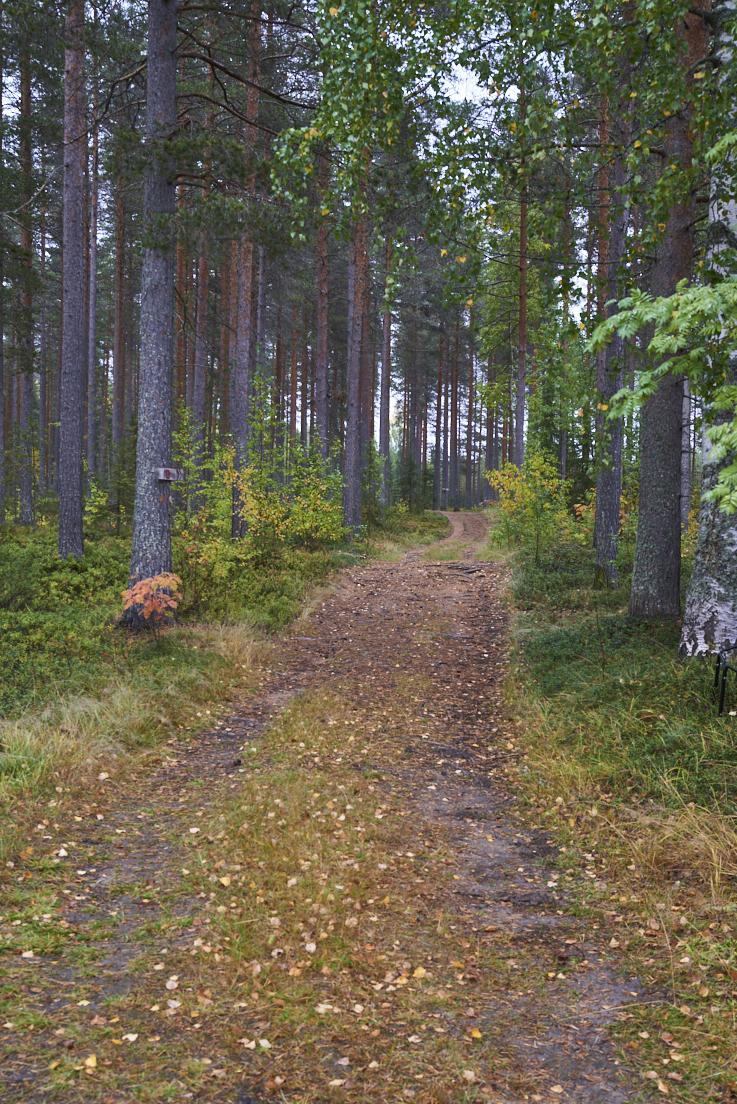 Un chemin dans les bois en Suède