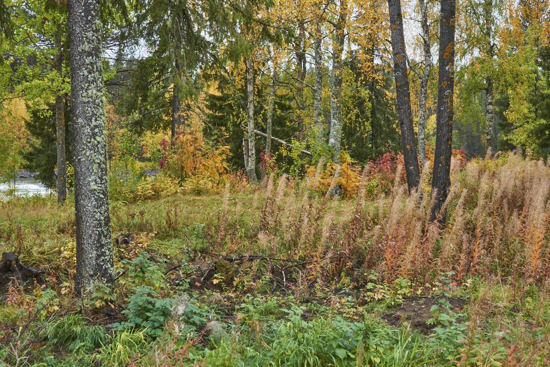 forêt en automne à Jockfall