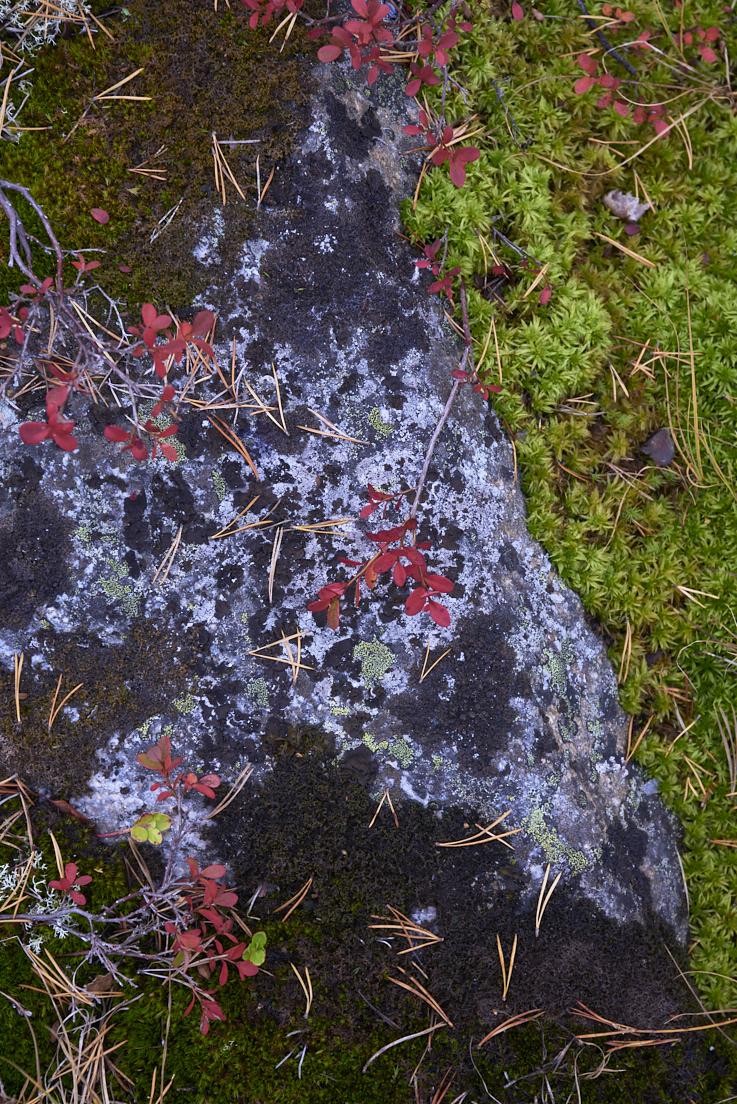 rocher et feuilles d'automne sur une île à Lulea