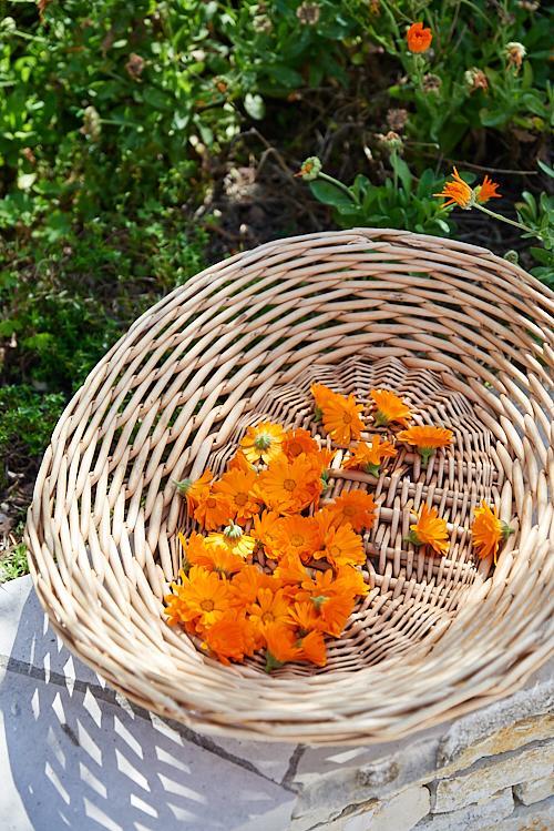 photo de Panier de fleurs de calendula avant séchage